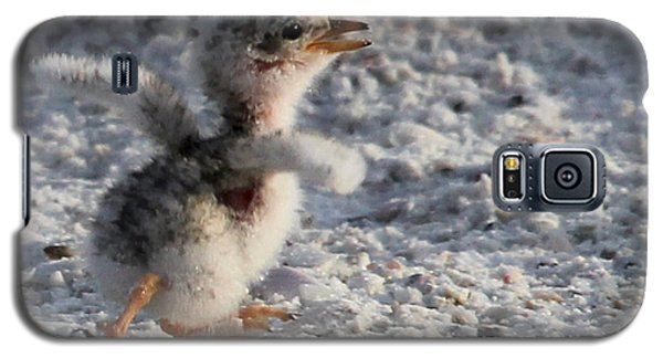 Running Free - Least Tern Galaxy S5 Case