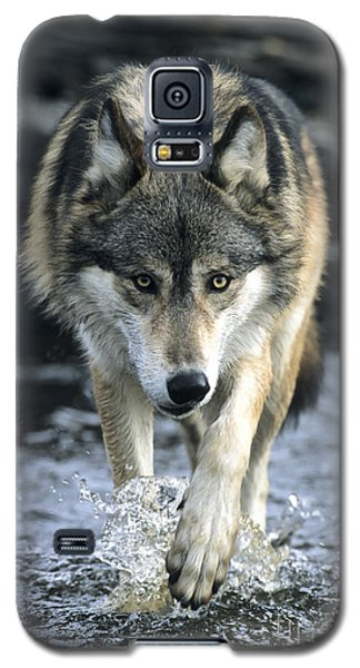 Galaxy S5 Case featuring the photograph Running Wolf by Chris Scroggins