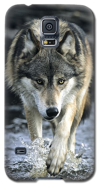Running Wolf Galaxy S5 Case
