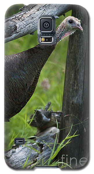 Rural Adventure Galaxy S5 Case by Nina Stavlund