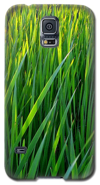 Galaxy S5 Case featuring the photograph Rushes In The Light Wc 2  by Lyle Crump