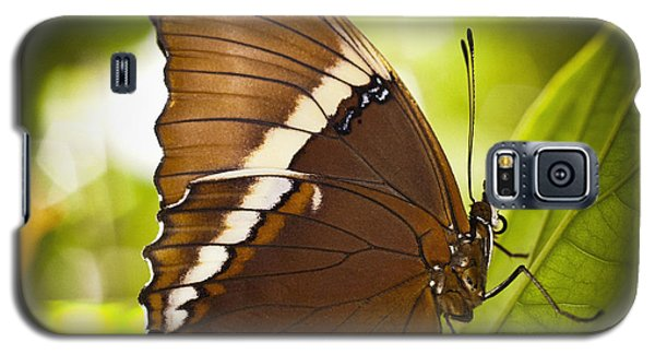 Galaxy S5 Case featuring the photograph Rusty Tip Butterfly by Bradley R Youngberg