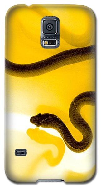 Galaxy S5 Case featuring the photograph S by Holly Kempe