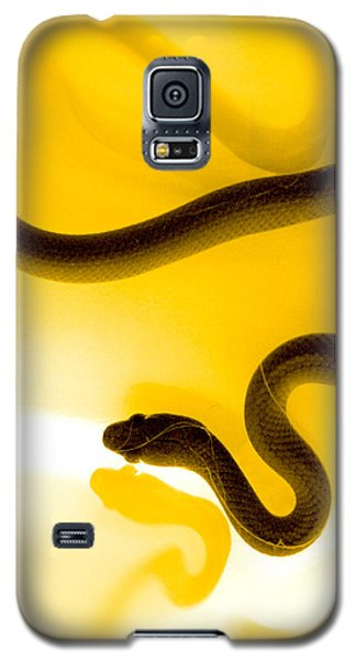 Snake Galaxy S5 Case - S by Holly Kempe