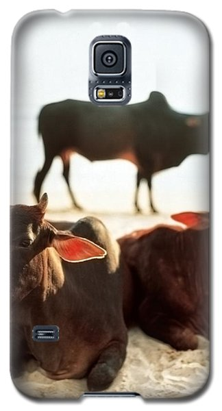 Sacred Cows On The Beach Galaxy S5 Case
