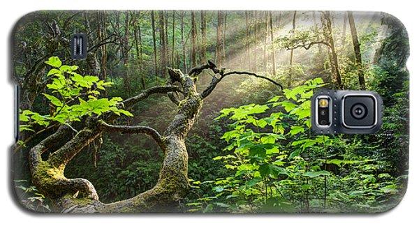 Sacred Grove Galaxy S5 Case