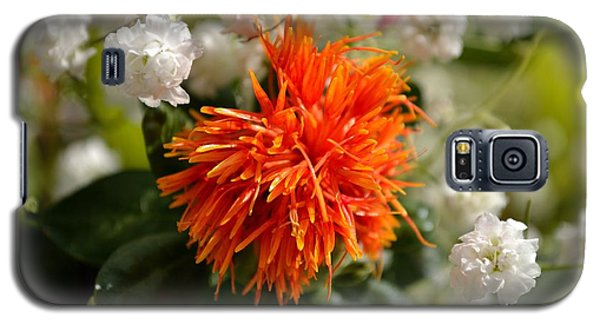 Safflower Amongst The Gypsophilia Galaxy S5 Case
