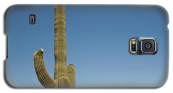 Saguaro Cactus In Bloom Galaxy S5 Case by Marianne Campolongo