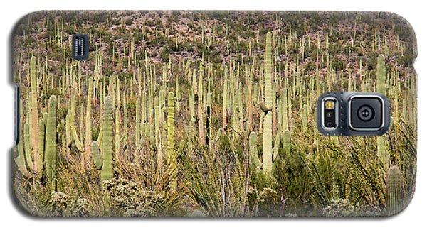 Saguaro Colony Galaxy S5 Case