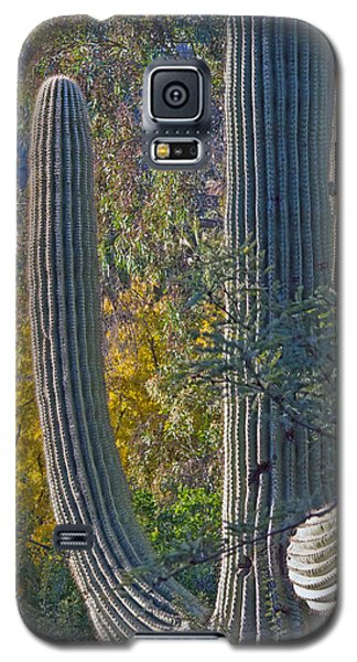 Saguaro Fall Color Galaxy S5 Case by Tam Ryan
