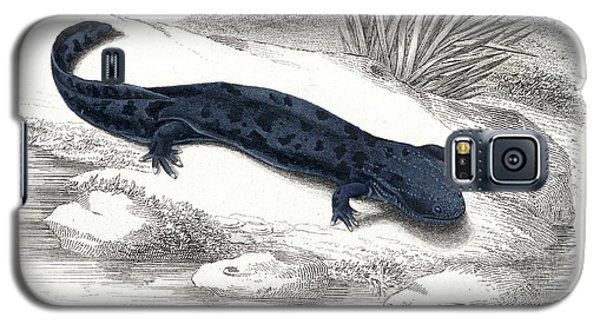 Salamanders Galaxy S5 Case - Salamander by Collection Abecasis
