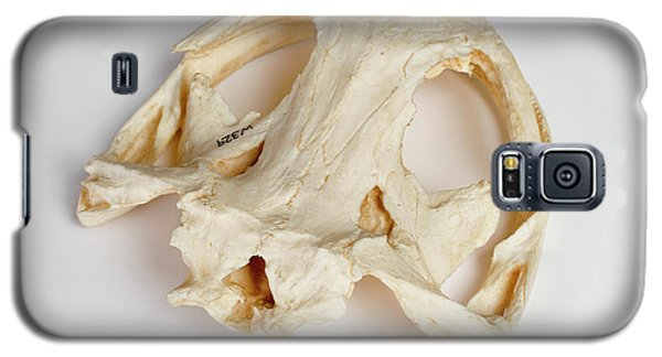 Salamanders Galaxy S5 Case - Salamander Skull Model by Ucl, Grant Museum Of Zoology
