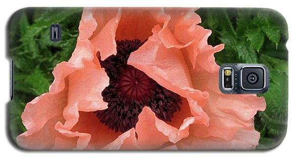 Salmon Colored Poppy Galaxy S5 Case by Barbara Griffin