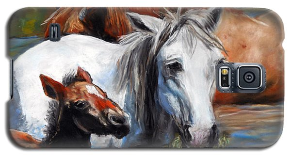 Salt River Foal Galaxy S5 Case by Karen Kennedy Chatham