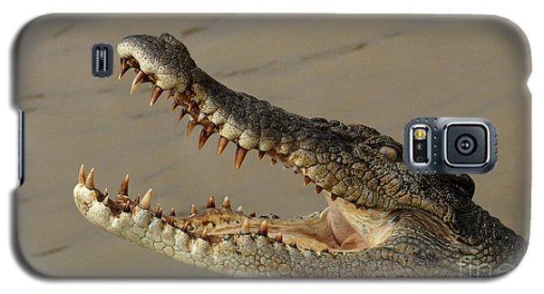 Salt Water Crocodile 1 Galaxy S5 Case by Bob Christopher