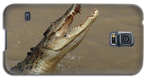 Salt Water Crocodile Australia Galaxy S5 Case by Bob Christopher