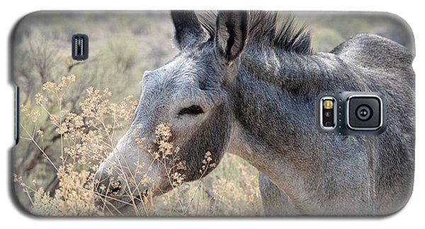 Sam The Burro Galaxy S5 Case