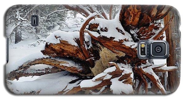 Galaxy S5 Case featuring the photograph San Jacinto Fallen Tree by Kyle Hanson