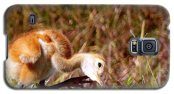 Galaxy S5 Case featuring the photograph Sand-hill Chick Scratching  by Chris Mercer