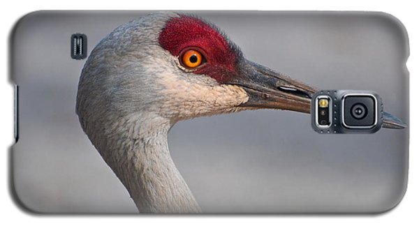 Galaxy S5 Case featuring the photograph Sand Hill Crane Portrait by Sabine Edrissi
