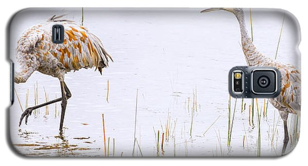 Sand Hill Cranes Foraging For Food Galaxy S5 Case