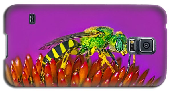 Sand Wasp Galaxy S5 Case by Marion Johnson