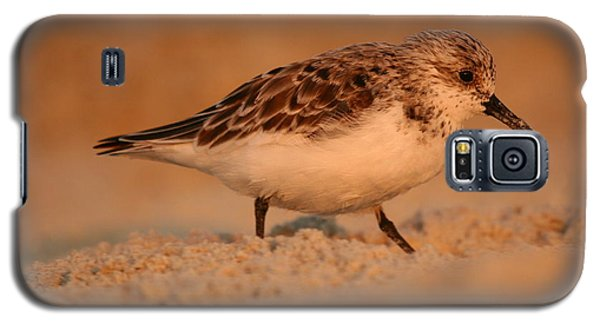 Galaxy S5 Case featuring the photograph Sanderling Sunrise by John F Tsumas