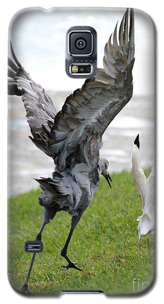 Sandhill Chasing Ibis Galaxy S5 Case by Carol Groenen
