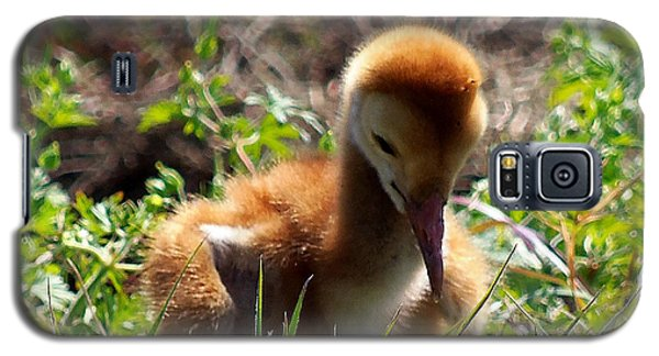 Galaxy S5 Case featuring the photograph Sandhill Chick 007 by Chris Mercer