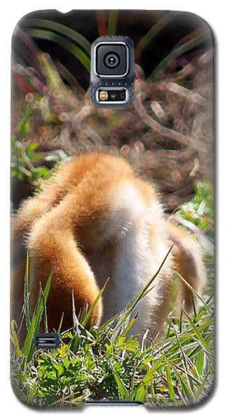 Galaxy S5 Case featuring the photograph Sandhill Chick 008 by Chris Mercer