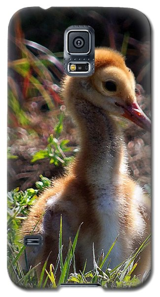 Galaxy S5 Case featuring the photograph Sandhill Chick 009 by Chris Mercer