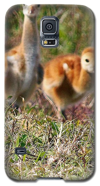 Galaxy S5 Case featuring the photograph Sandhill Chicks by Chris Mercer