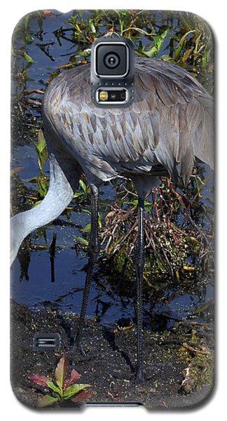 Sandhill Crane 035 Galaxy S5 Case by Chris Mercer