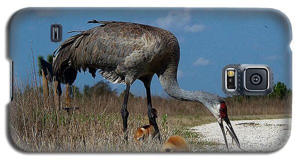 Galaxy S5 Case featuring the photograph Sandhill Crane 038 by Chris Mercer
