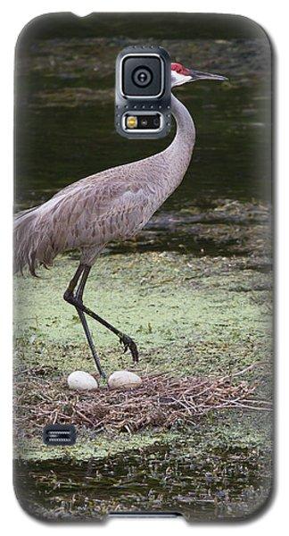 Sandhill Crane And Eggs Galaxy S5 Case