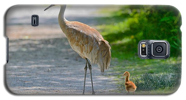 Galaxy S5 Case featuring the photograph Sandhill Crane Colt by Kathy King