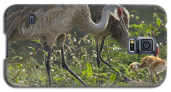 Sandhill Crane Family Galaxy S5 Case