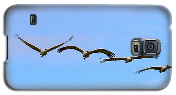 Sandhill Crane Flight Pattern Galaxy S5 Case by Mike Dawson