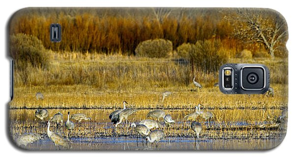 Sandhill Flock In Fall Galaxy S5 Case