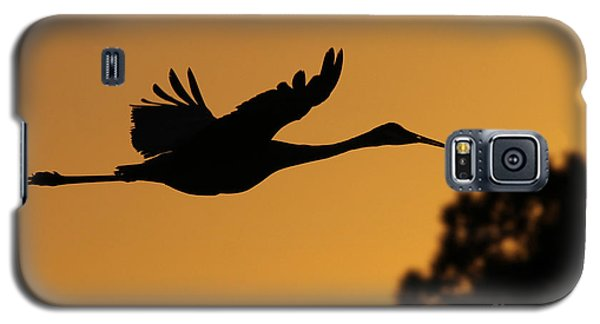 Sandhill Crane In Flight Galaxy S5 Case