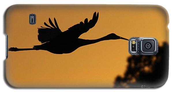 Sandhill Crane In Flight Galaxy S5 Case
