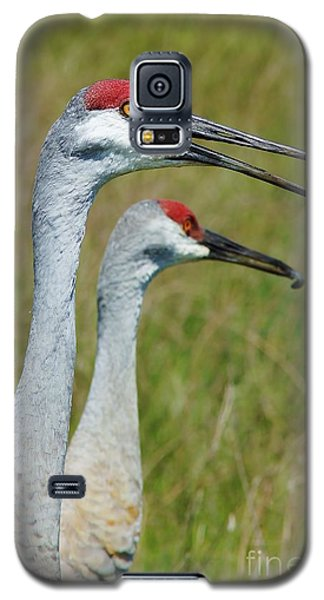 Sandhill Crane Portraits W-grub Galaxy S5 Case