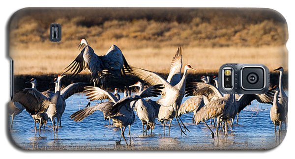 Cranes Dance For Joy Galaxy S5 Case