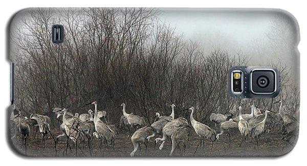 Sandhill Cranes In The Fog Galaxy S5 Case
