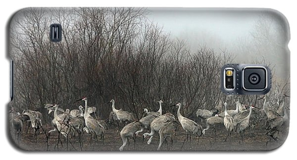 Galaxy S5 Case featuring the photograph Sandhill Cranes In The Fog by Farol Tomson