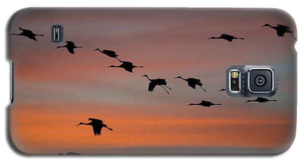 Galaxy S5 Case featuring the photograph Sandhill Cranes Landing At Sunset by Avian Resources