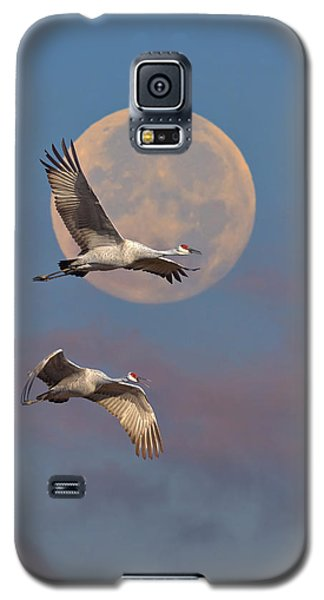 Sandhill Cranes Passing The Moon In The Morning Galaxy S5 Case by Steven Llorca