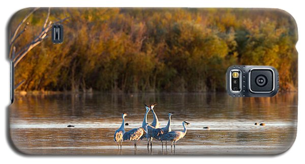 Six Sandhill Cranes Galaxy S5 Case