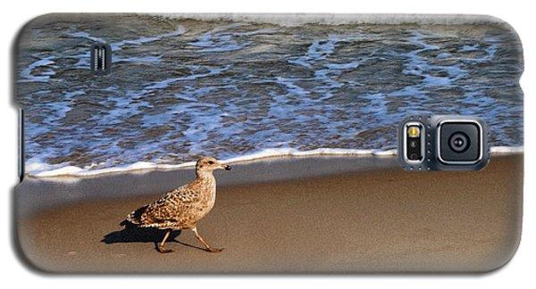Sandpiper At Ortley Beach, Nj Galaxy S5 Case