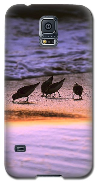 Sandpiper Morning Galaxy S5 Case